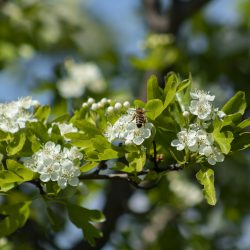 Five seeds to plant this spring